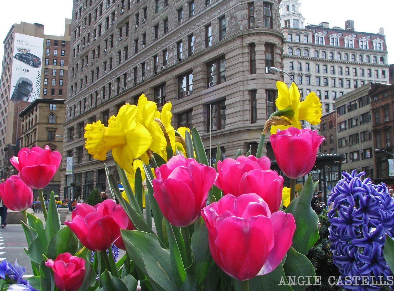 Mayo En Nueva York Qué Hacer Y El Tiempo 2021 Nueva York Mayo Viaje A Nueva York