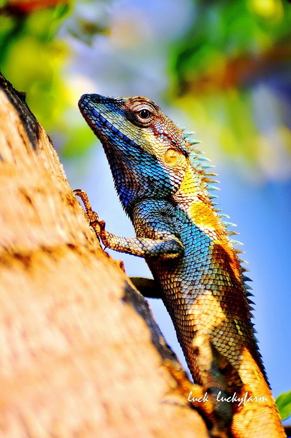 Chameleoflage Reptilien Frosche