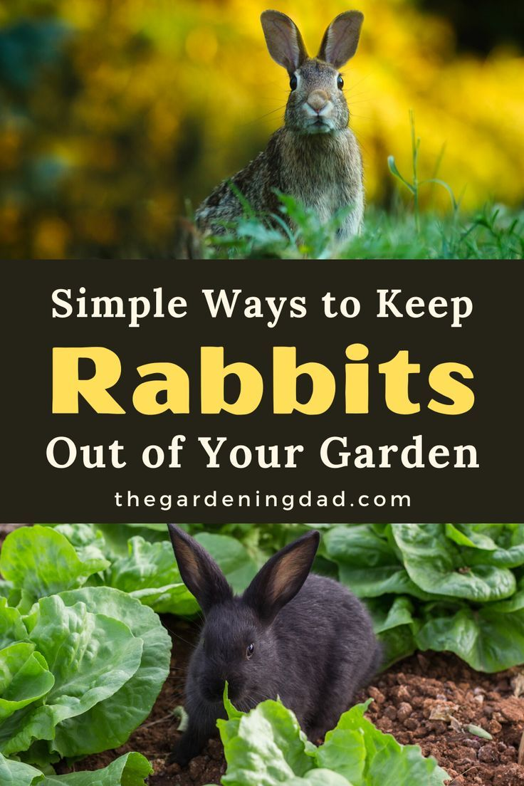 How to Keep Rabbits Out of Garden (20 EASY Tips) - The ...