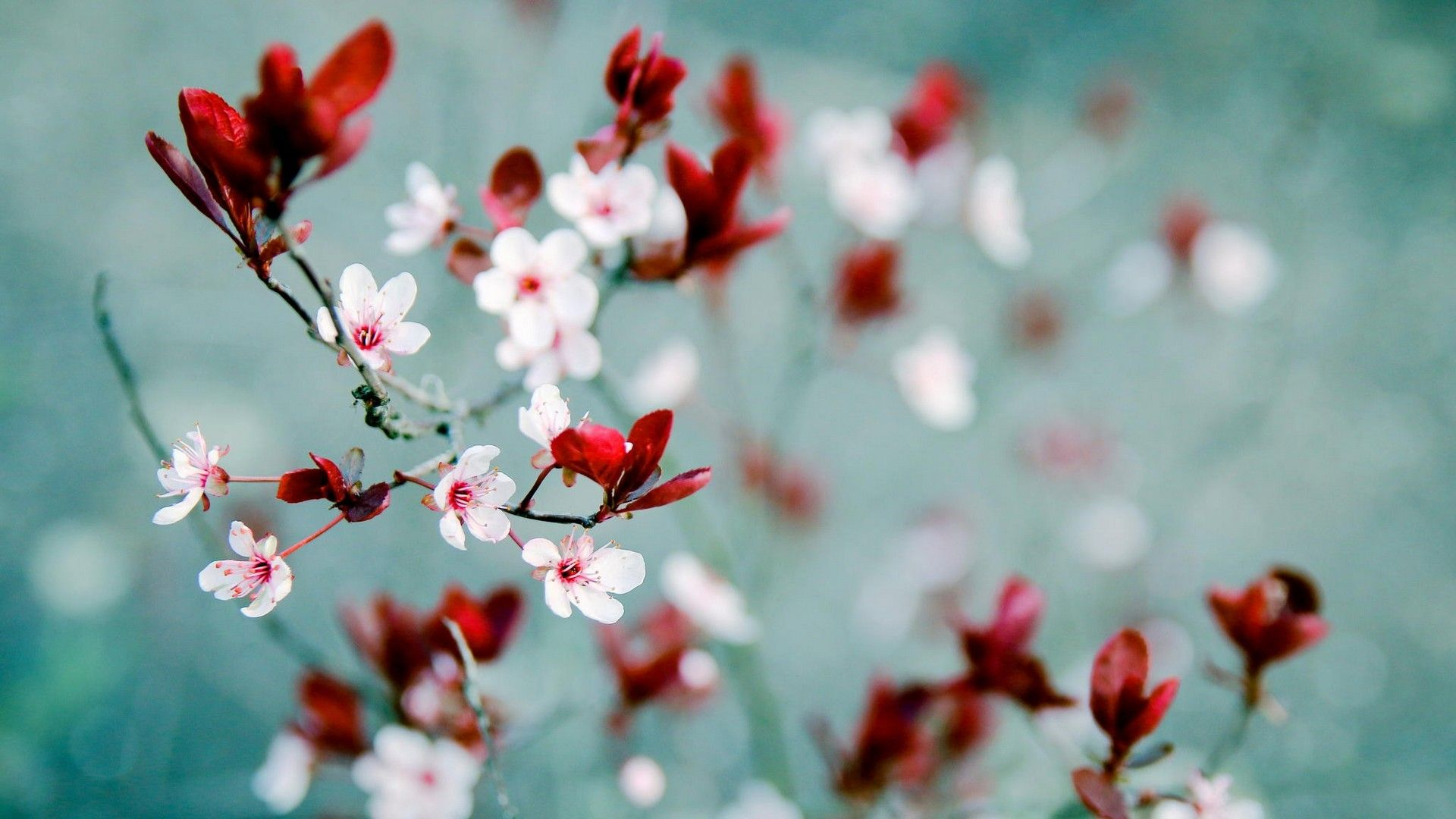 Hd Wallpaper Spring Flowers 2021 Live Wallpaper Hd Spring Wallpaper Spring Pictures Hello Spring Wallpaper