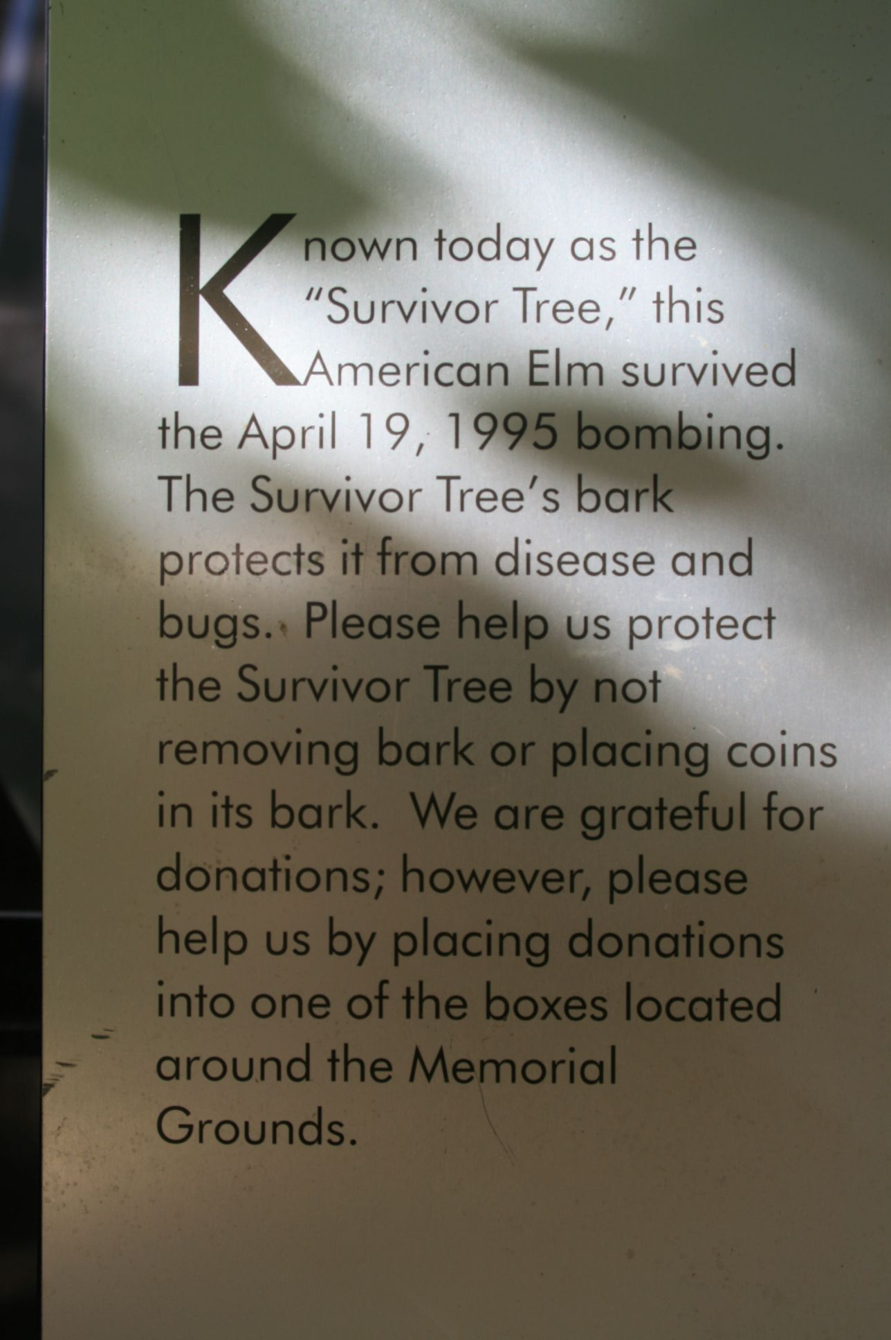 The Survivor Tree, Oklahoma City Bombing Memorial