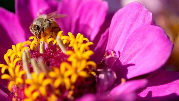 Disneynature | Pollen | Site officiel | Disney.fr