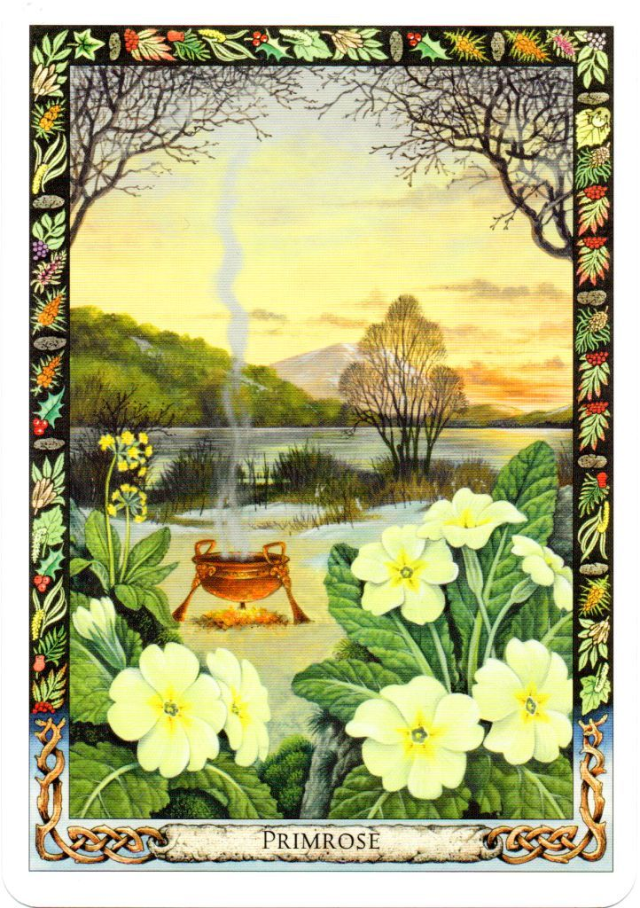 Tarot Oracles And Other Signs Along The: I Like . . . Cards - Druid Plant