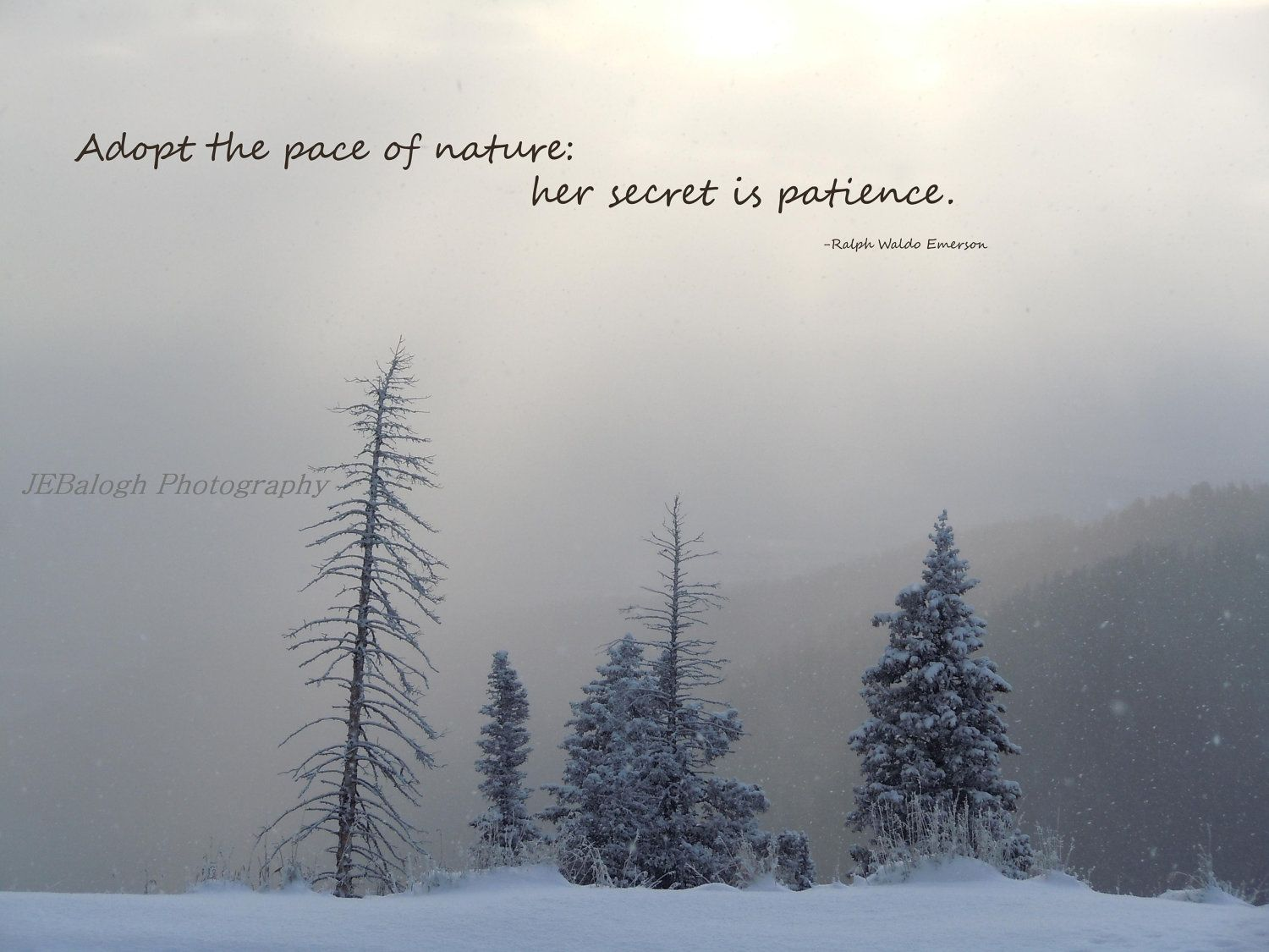 Scenic quotes daily inspirational quotations and sayings on - Nature Photography Inspirational Quotes Winter Wonderland Snowy Trees Mountains Emerson Adopt The Pace Of Nature Print