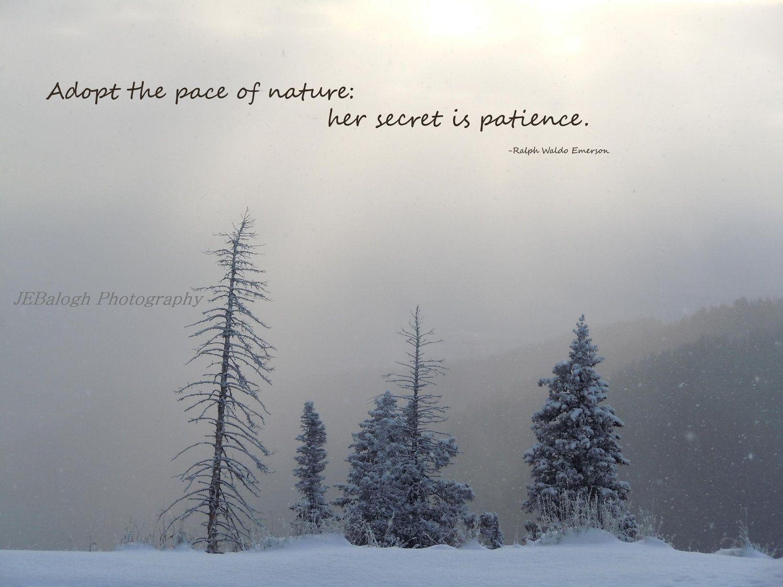 Nature Photography, Inspirational Quotes, Winter Wonderland ...