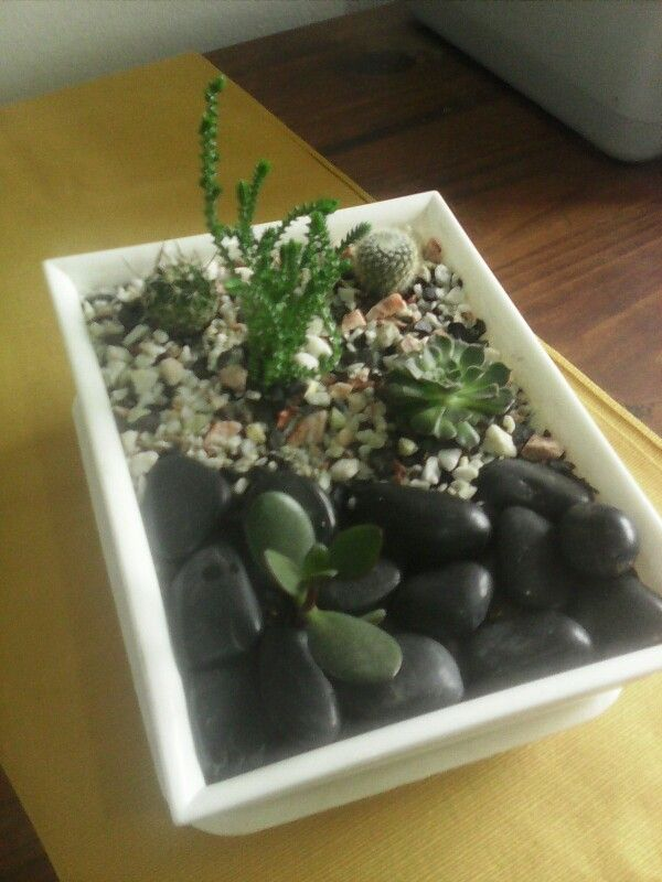 Mini jardin de cactus y crasas Manos Verdes Jardines para llevar