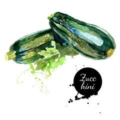 Zucchini. Hand drawn watercolor painting on white background. Ve