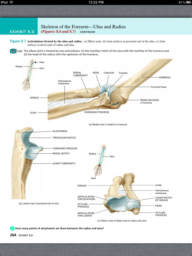 Tolle Chapter 8 Anatomy And Physiology Test Ideen - Anatomie Von ...
