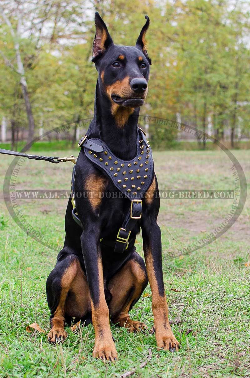 Adjustable Spiked Leather Dog Harness For Doberman Walking And