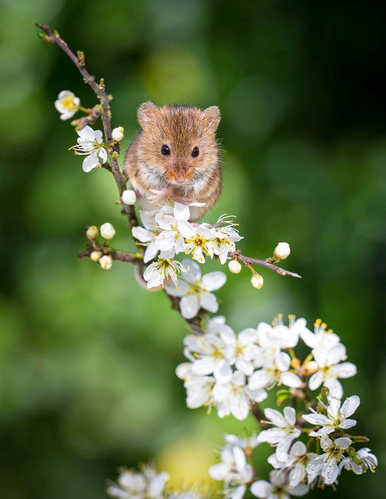 Cute Mice Cute animals, Animals beautiful, Cute animal