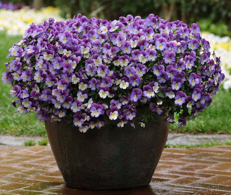 Potted plants potted plant ideas full sun in plants for Planting flowers in pots ideas
