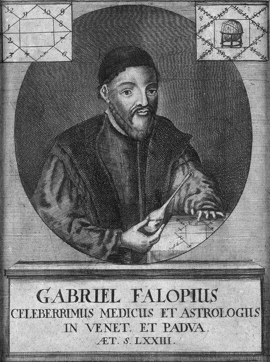 Image:  Unbekannter Künstler - Portrait of Gabriele Falloppio (1523-1562 https://pinterest.com/pin/287386019944085507/). #Falopius #Fallope