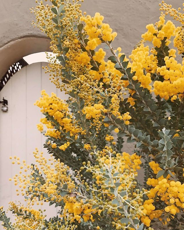 Shades Of Yellow Color Names For Your Inspiration - Going To Tehran