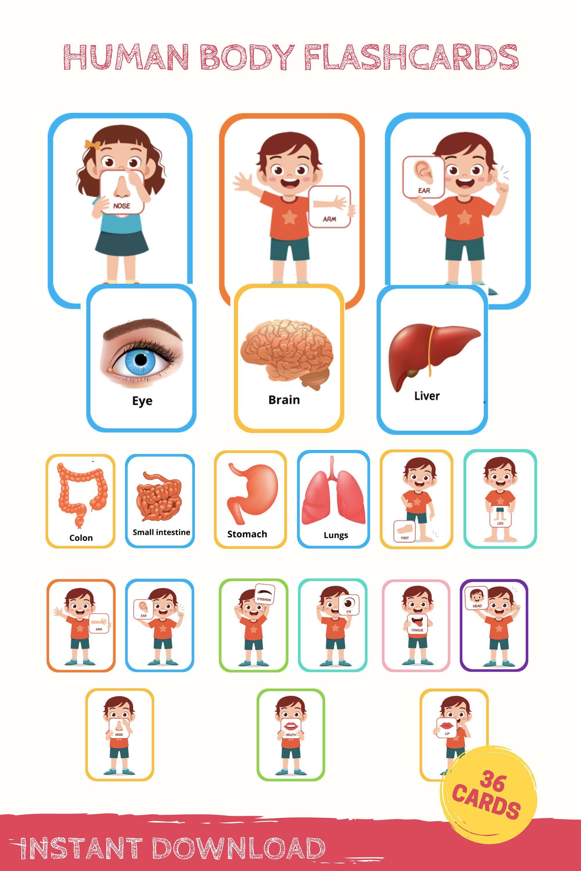 Human Body Flashcards Anatomy Flashcards Human Body Printable Preschool Flashcards Homeschool Printable Human Body Printables Preschool Memories Flashcards [ 3000 x 2000 Pixel ]