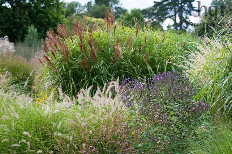 Harpur garden images ltd mwis720 rhs garden wisley surrey harpur garden images ltd mwis720 rhs garden wisley surrey ornamental grasses plant combination workwithnaturefo