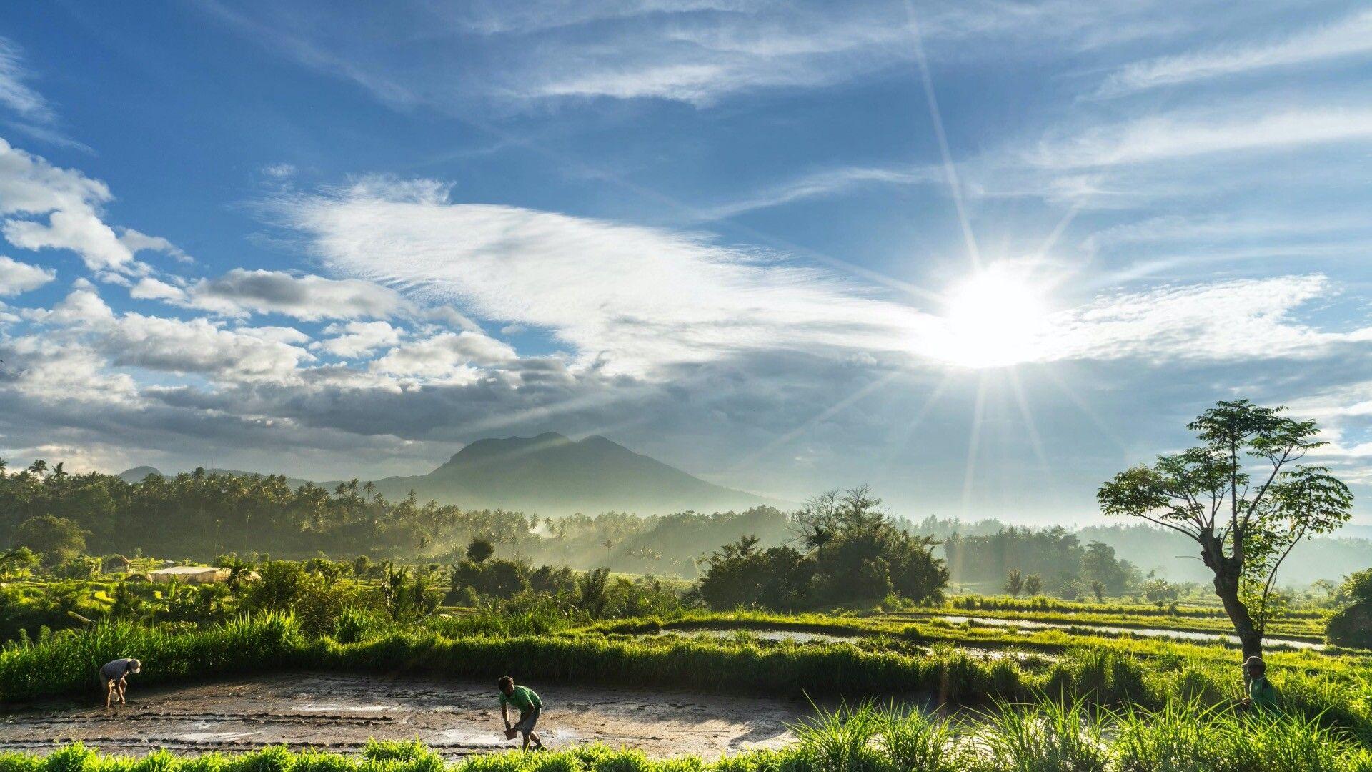 巴厘岛稻田风光高清动态壁纸 natural landmarks nature landmarks