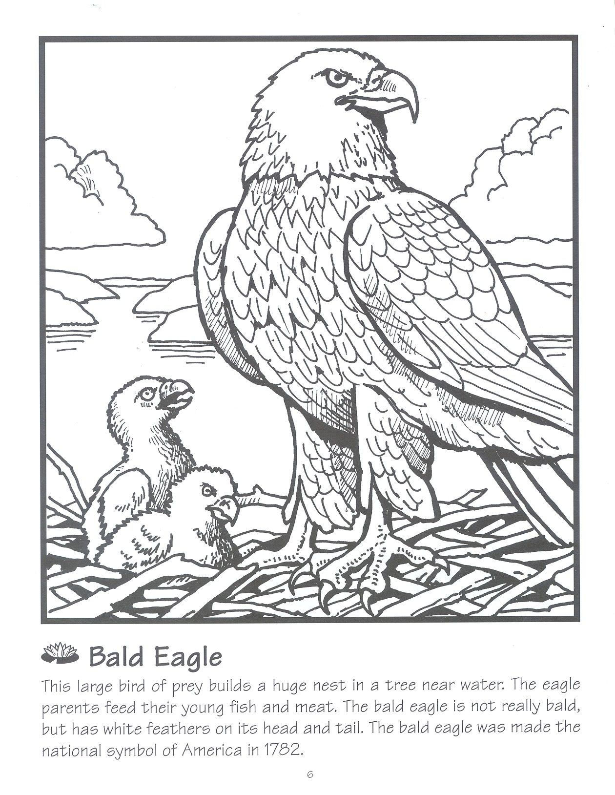 Bald Eagle Coloring Page Coloring Pages Superhero Coloring