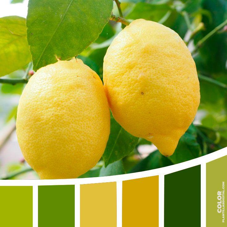 Color 41 Apunta y explora tus colores o códigos hexadecimales favoritos con el color número 41 en paleta...