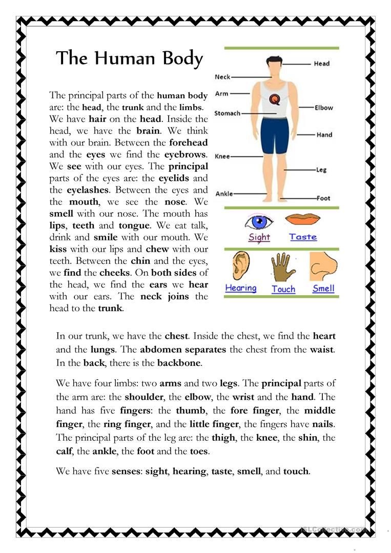 The Human Body English ESL Worksheets for distance