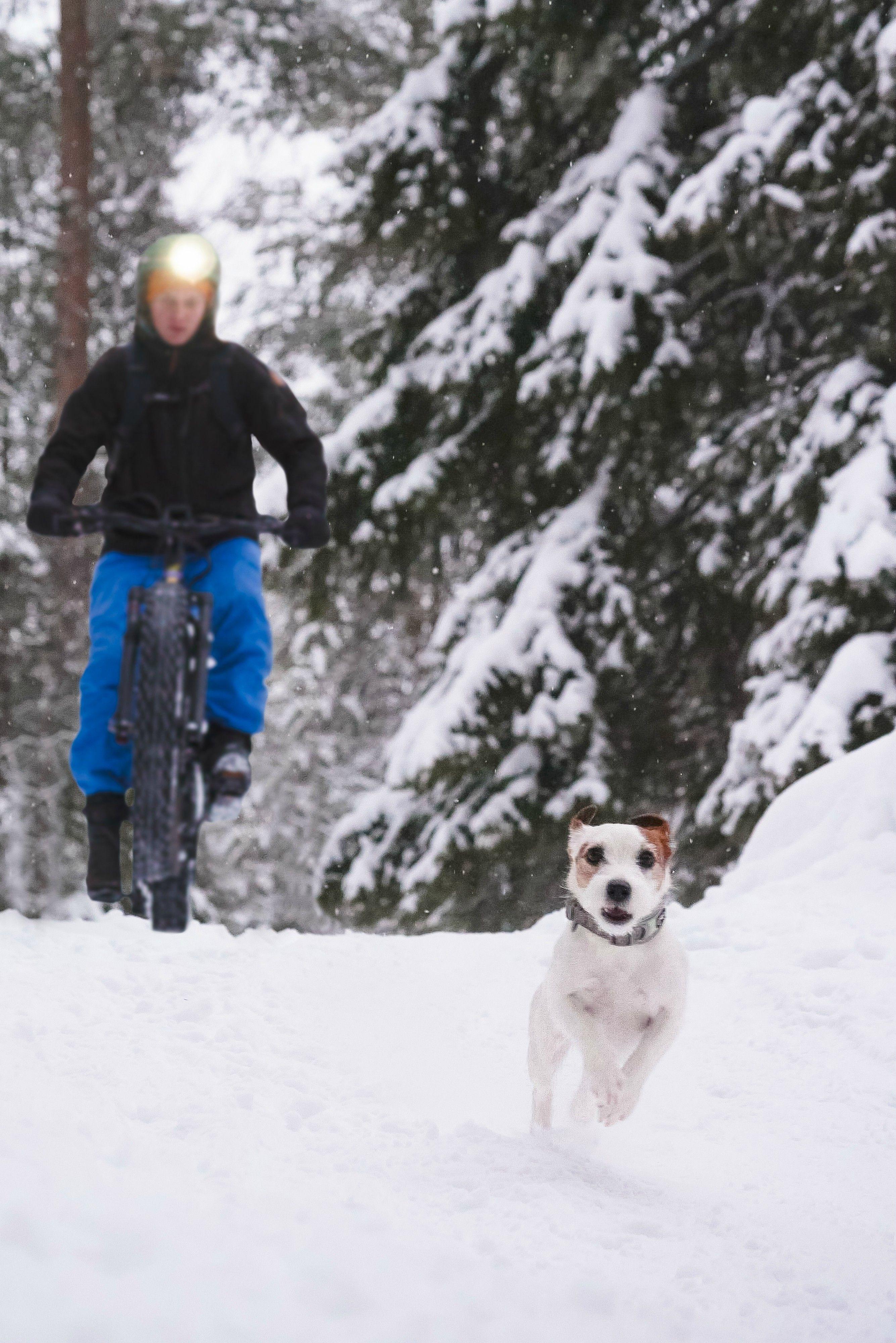 Outdoor Adventures Winter Biking In Salla Finland Jack Russel