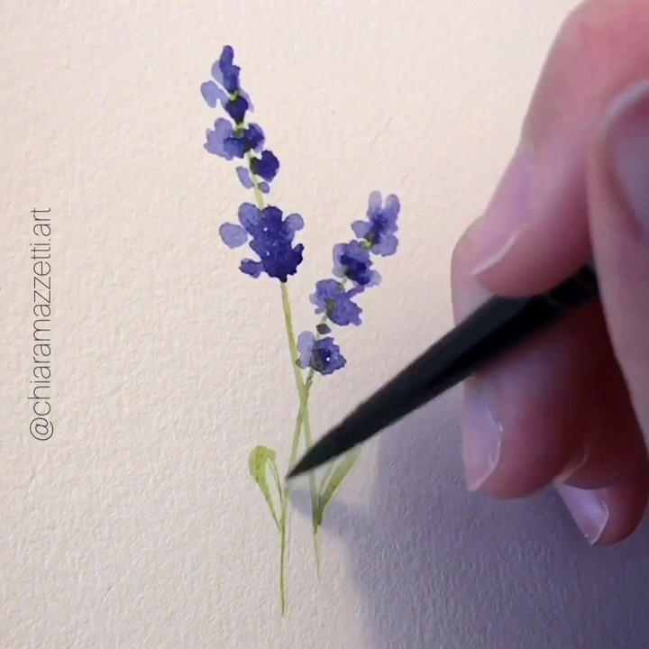 Photo of Lavender, loose watercolor flower