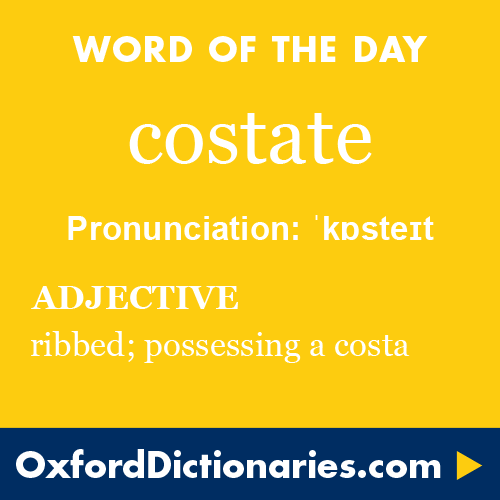 costate (adjective): An ancient Roman gladiator who used a