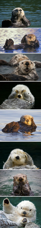 Sea Otters Are So Photogenic Help Save Marine Animals