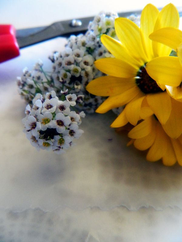 Easy how to on pressing flowers with wax paper homeheartcraft easy how to on pressing flowers with wax paper homeheartcraft mightylinksfo