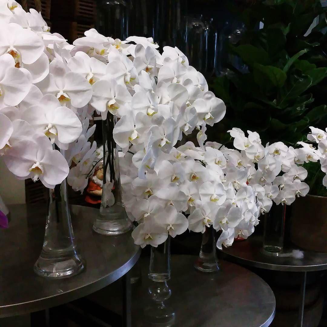 Timeless Seedflora Whiteautumn Photooftheday Love