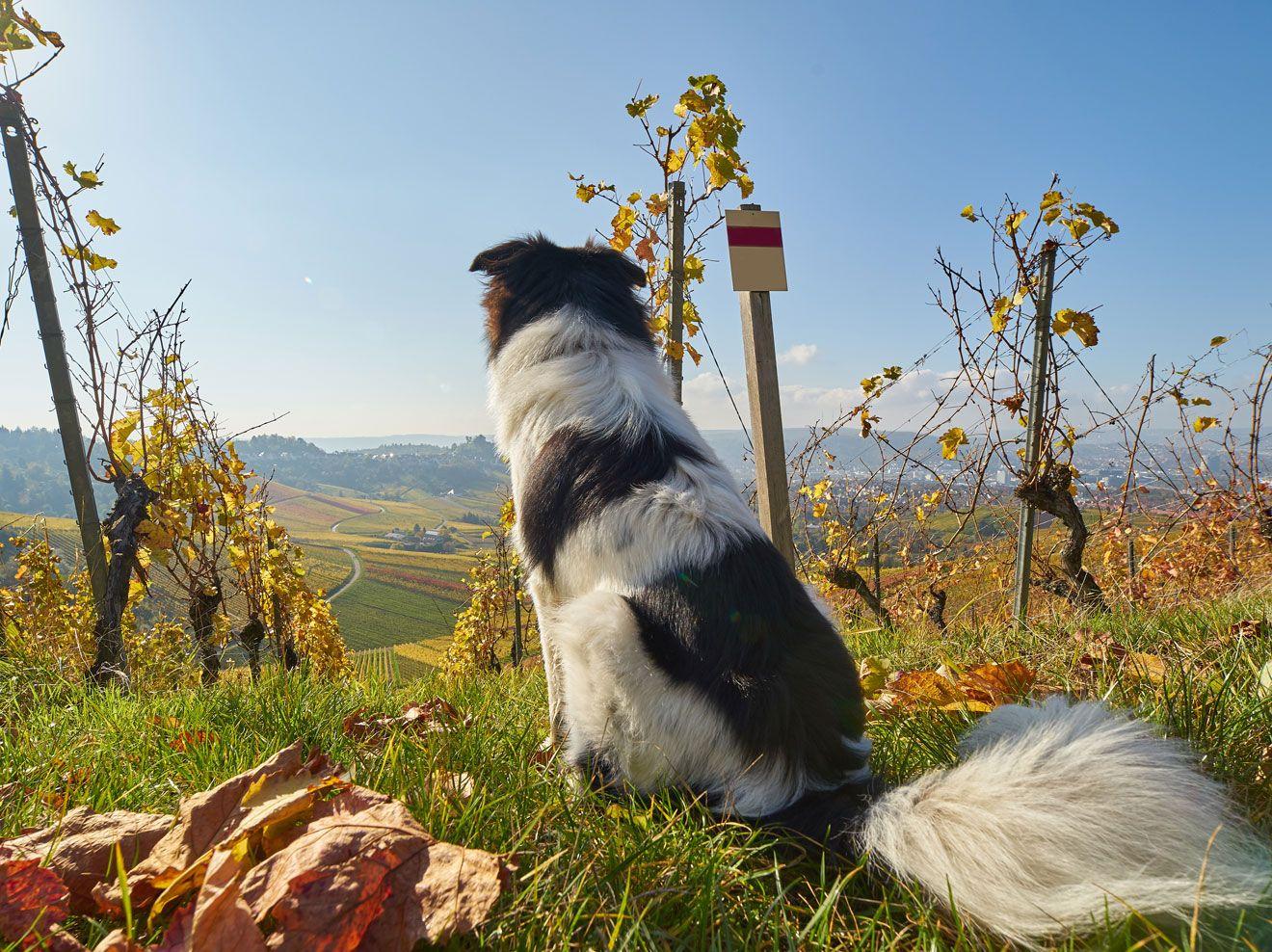 Wanderurlaub Mit Hund Das Sind Die Schonsten Touren Wanderurlaub Mit Hund