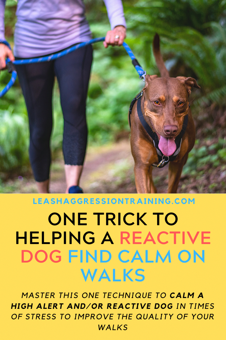 Tips For Potty Training Your Puppy In 2020 Reactive Dog Calm Dogs Dog Training