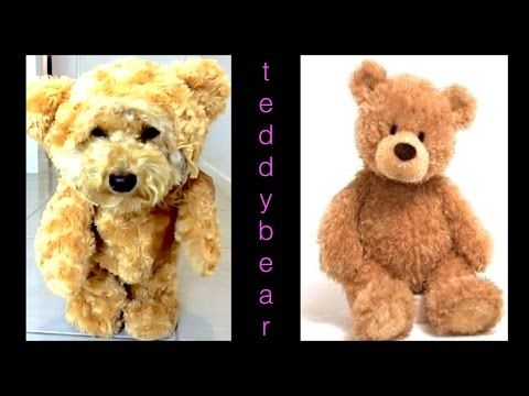 How To Make Teddy Bear Dog Costume Munchkin Outfit Diy Dog Craft