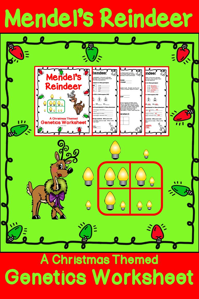Christmas Punnett Square Worksheet Reindeer Genetics