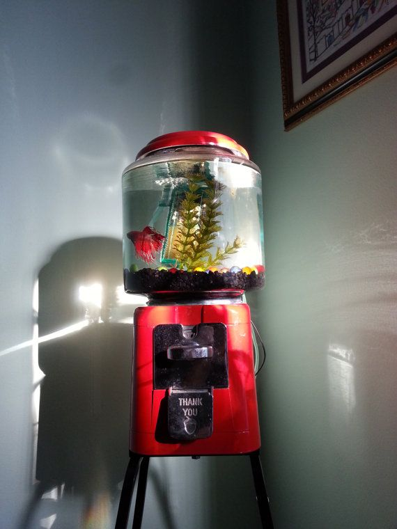 Gumball machine aquarium by yooderstuff on etsy for Gumball fish tank