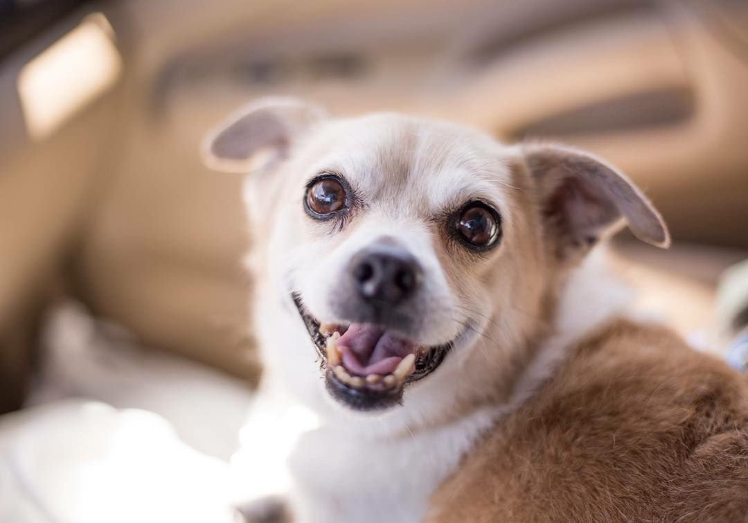 This handsome guy is Teddy! Lucky Dog Rescue | Rescue