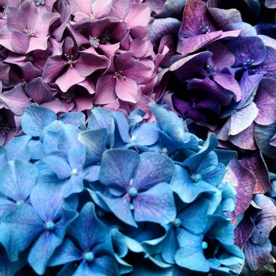 Hello Spring Spring Printemps Flower Fleur Flores - Color-hortensia