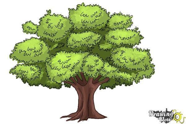 old oak tree drawing pinterest searching