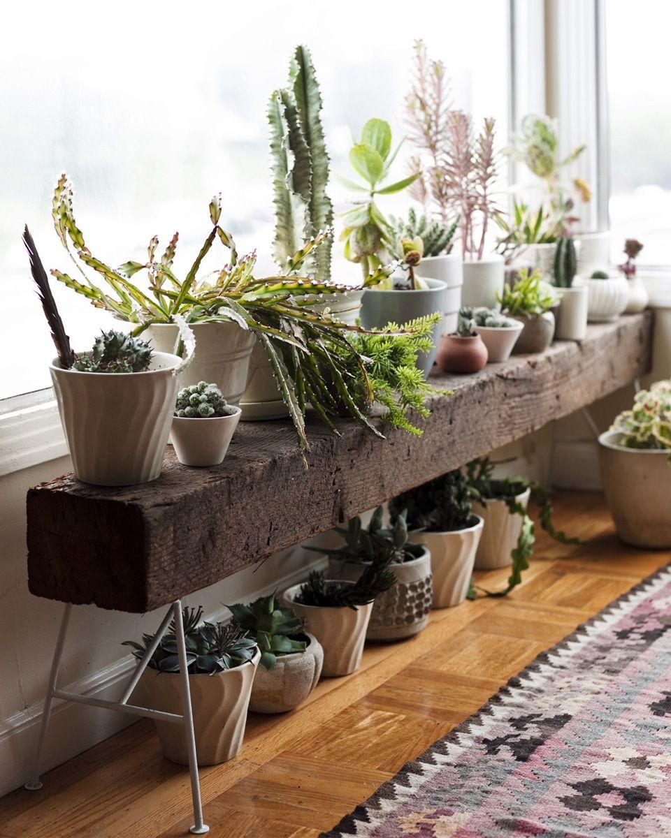 comment utiliser les plantes dans sa d co. Black Bedroom Furniture Sets. Home Design Ideas