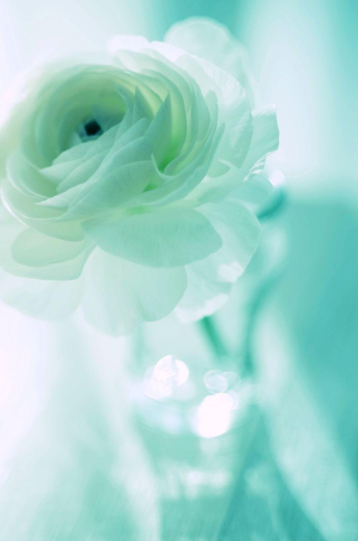 Resultado De Imagen Para Rosas Turquesas Naturales Paisajes