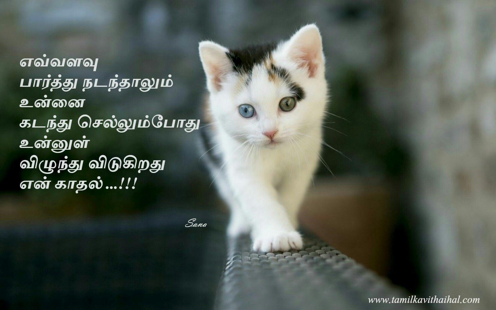 tamil kadhal kavithai Funny cat wallpaper, Kitten