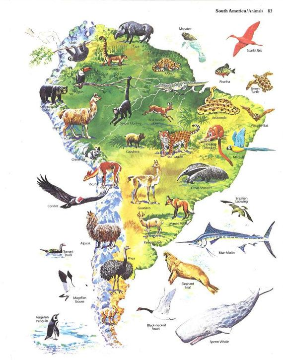 South america map illustration world animals vintage map art south america map illustration world animals vintage map art animal map decor colorful gumiabroncs Image collections