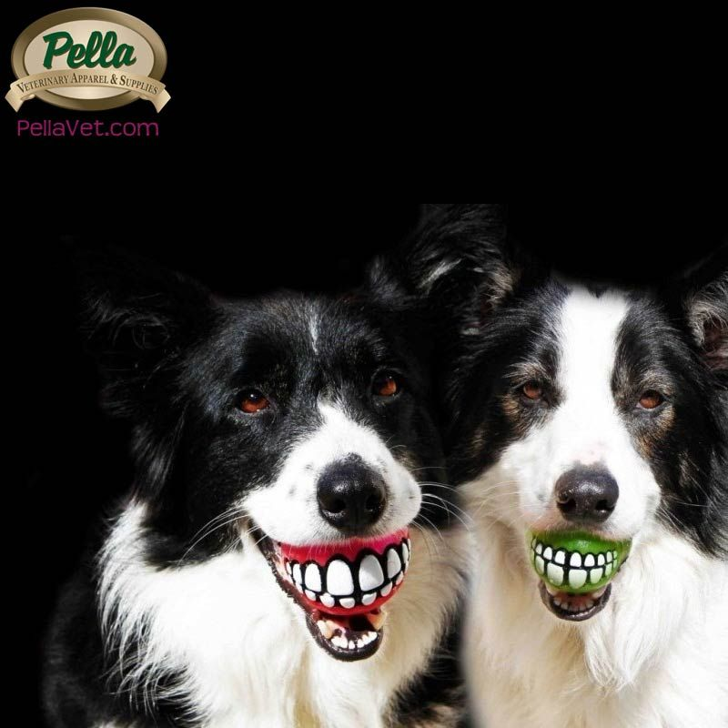 SMILE it's National #Pet #Dental #Health Month!  ---  https://www.avma.org/Events/pethealth/Pages/February-is-National-Pet-Dental-Health-Month.aspx