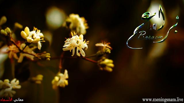 معنى اسم براعم وصفات حاملة هذا الاسم Baraem Plants Flowers Dandelion