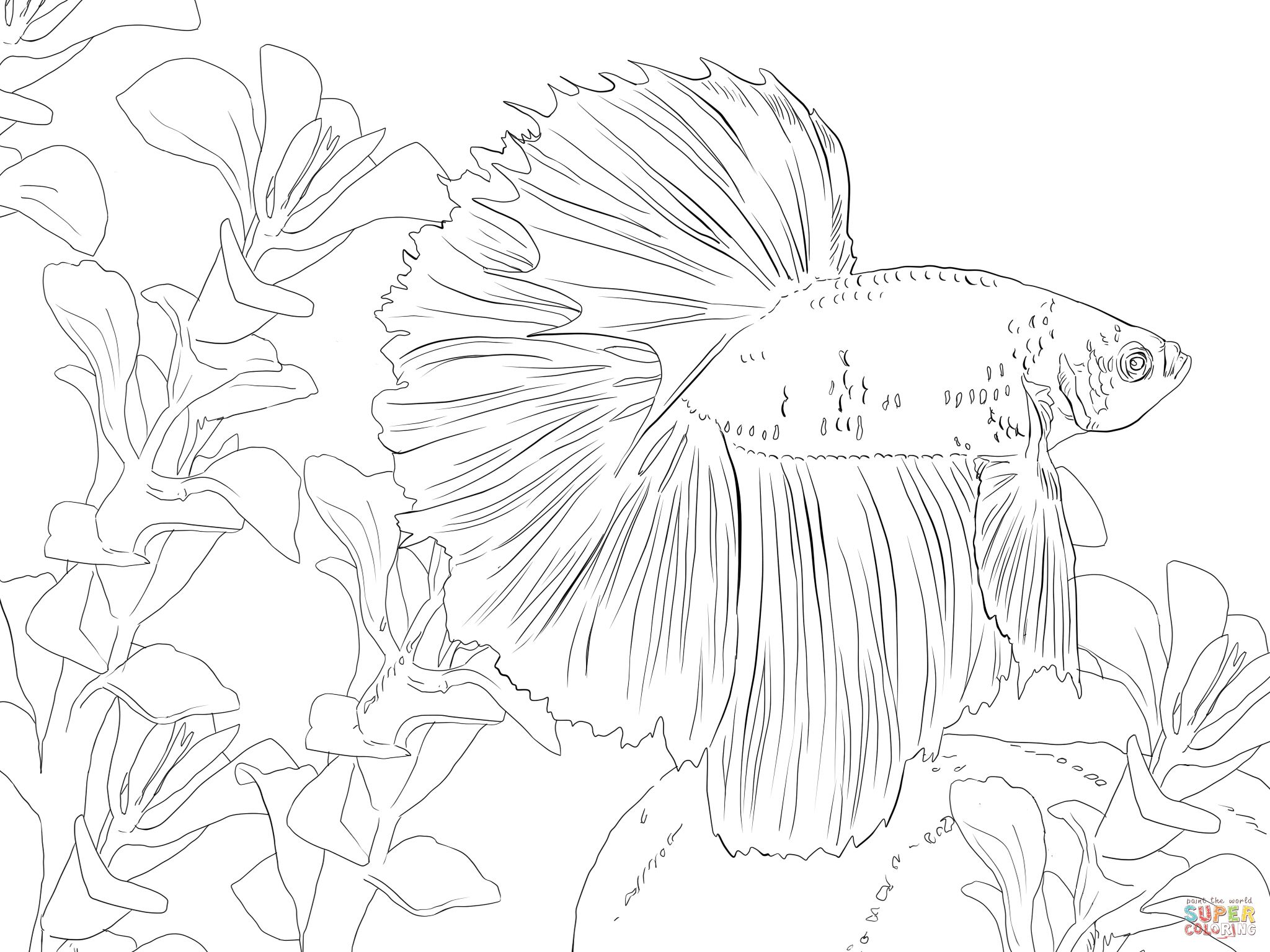 Betta Fish Coloring Pages Betta Fish Coloring Online Fish