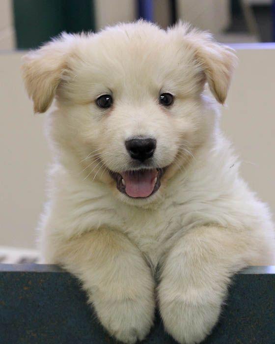 Cuteeeeeeee Till He Gets Big Puppers Other Cute Things