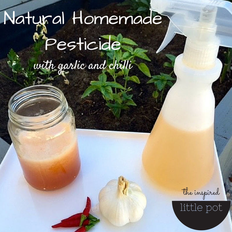 Natural Homemade Pesticide The Inspired Little Pot