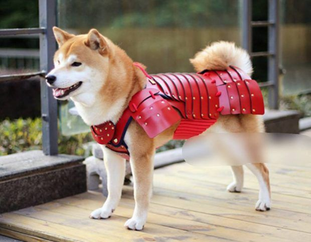 A Japanese Company Is Making Samurai Armour For Cats And Dogs Dog Armor Cat Armor Pet Costumes