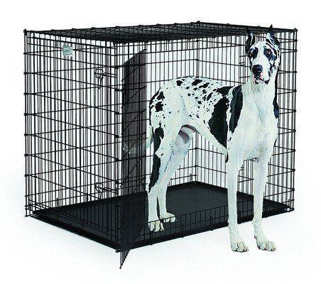 6 Extra Large Dog Breed Great Dane Xxxl Dog Crate Xxxldogcrate