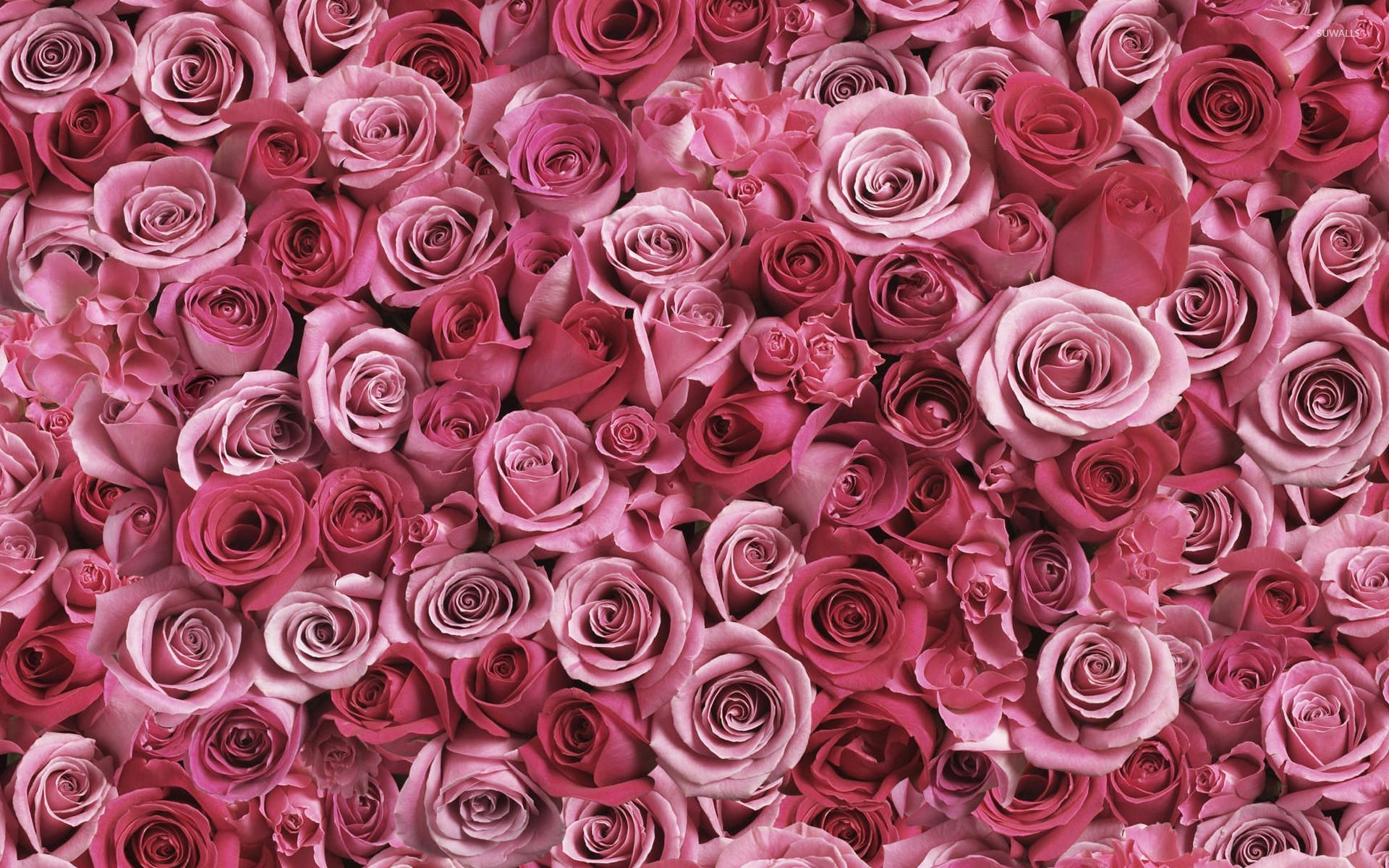 Rose Wallpaper Android Apps On Google Play Rose Flower Wallpaper Flower Wallpaper Rose Wallpaper