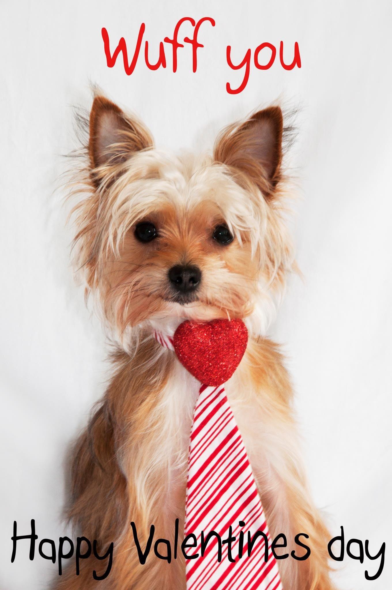 Valentines Day Yorkie Wuff You Yorkie Puppy Valentines Happy Valentines Day